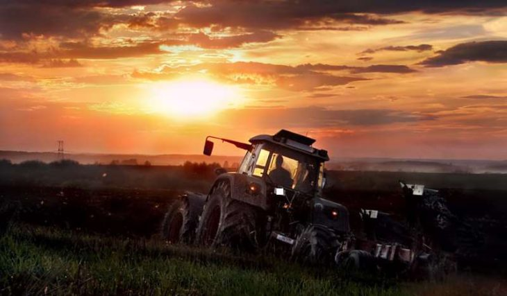 Кубанские фермеры