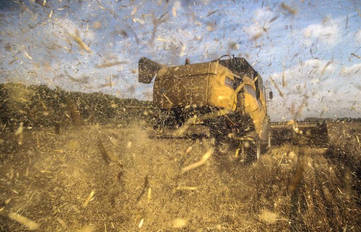 К рекордным урожаям