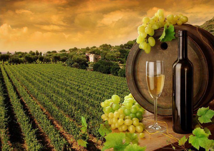виноградников на Кубани
