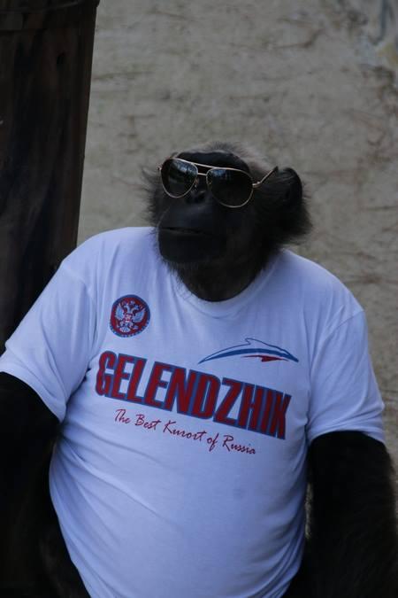 Шимпанзе Джон