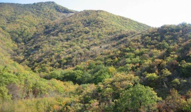 Леса Геленджика