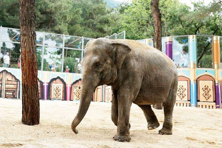 В День защиты слонов в зоопарках