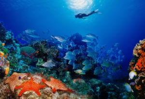 Дайвинг в Турции: подводные пещеры и античные города