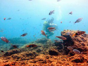 Дайвинг в Турции: подводные пещеры и античные города 2